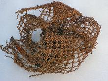 Plantaardig-Ornament
